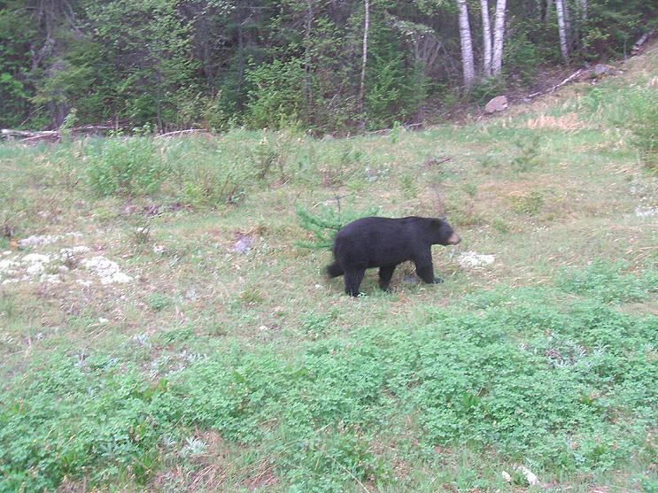 Ontario Wildlife Photos
